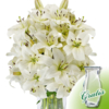 10 weiße Lilien mit Vase