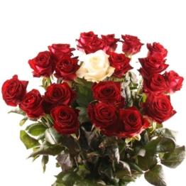 Langstielige Premium-Rosen mit Rabatt - Farbe & Anzahl wählbar - Alle Farben