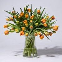 Tulpen in Orange 50 Stiele