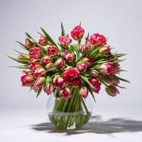 Tulpen in Pink 50 Stiele