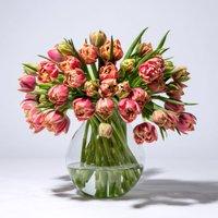 Tulpen in Rosa und Gelb 50 Stiele