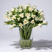 Tulpen in Weiß 50 Stiele