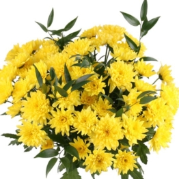 10 gelbe Chrsysanthemen