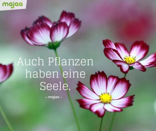 8104-sprueche-zitate-nachdenken-weisheiten-lebensweisheiten-leben-liebe-spirituell-energie-schoen-herzlich-positiv-majaa-pflanzen-seele
